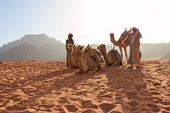 Bedouins preparing the camels for the tourist that will ride them at sunset in the Wadi Rum desert, Jordan Royalty Free Stock Photo