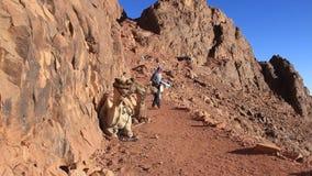 Bedouins. Zet Sinai op. Egypte stock videobeelden