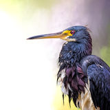 Bedraggled stock images