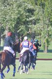 Bedreigd Wolf Center 2018/McGehee Polo Field royalty-vrije stock fotografie