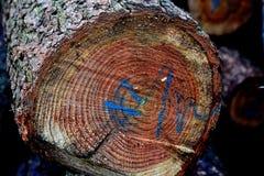 Bedreigde boom met blauwe beschrijving, detail, besnoeiing, vooraanzicht, foto royalty-vrije stock foto