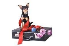 Bedrijfs hond Royalty-vrije Stock Foto