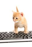 Bedrijfs katje dat ï¿ ½ n toetsenbord werkt Stock Foto's
