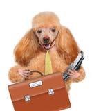 Bedrijfshond Stock Foto's