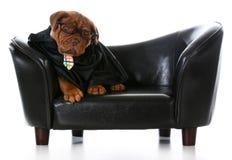 Bedrijfshond Stock Foto