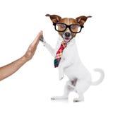 Bedrijfshond hoge vijf Royalty-vrije Stock Foto