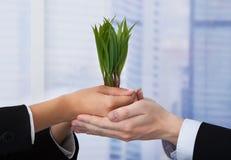 Bedrijfsmensen die jonge boompjes in bureau houden Stock Afbeelding