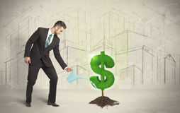 Bedrijfsmensen poring water op het teken van de dollarboom op stadsachtergrond Stock Afbeeldingen