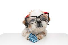 Bedrijfsmensenhond Stock Afbeelding