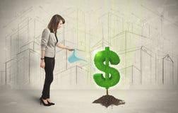 Bedrijfsvrouwen poring water op het teken van de dollarboom op stadsbackgrou Stock Fotografie