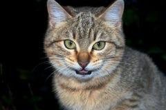 Bedrohen Sie Katze lizenzfreie stockfotos