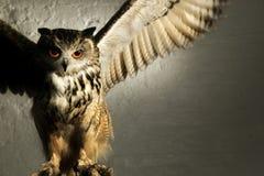 BEDROHENDER EAGLE OWL Stockbild