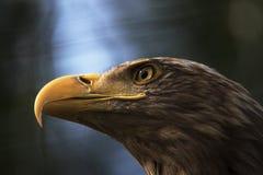 Bedrohlicher Vogel Stockfotos
