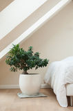 Bedroom with zen decorative bonsai Royalty Free Stock Photography