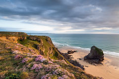 Bedruthan Thrift Royalty Free Stock Image