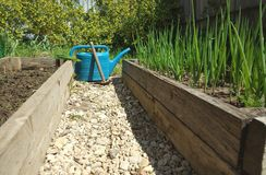 beds with green onions and stony  path between them Stock Images