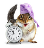 Bedtime concept, Funny animal chipmunk with clock and sleeping h Royalty Free Stock Photos