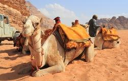 Beduin en hun kamelen Stock Afbeeldingen