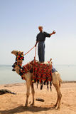 Beduin on his camel in Egypt. Man standing on his camel in Sharm el Sheikh - Egypt Royalty Free Stock Photos