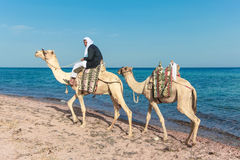Beduin på en kamel royaltyfri bild