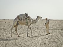 Beduin prowadzenia nad wielbłądem w saharze zdjęcie stock
