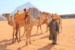 Beduin and their camels Royalty Free Stock Images