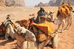 Beduin and their camels. In Wadi Rum in Jordan. Wadi Rum is one of Jordan's main tourist attractions being the most stunning desertscape in the World, lying 320 royalty free stock images