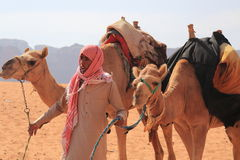 Beduin and their camels Stock Photo