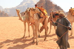 Beduin and their camels Royalty Free Stock Image