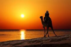 Beduine auf Kamelschattenbild gegen Sonnenaufgang stockfotografie