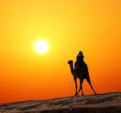 Beduine auf Kamelschattenbild gegen Sonnenaufgang Lizenzfreie Stockbilder