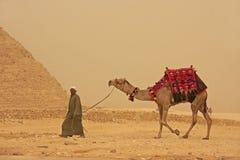 Beduine, der mit Kamel nahe Pyramide von Giseh, Kairo geht Stockfotografie