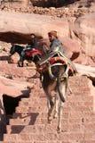Beduinen, die Esel reiten Stockfotos
