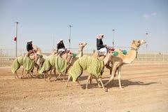 Beduinen mit ihren laufenden Kamelen stockfotos