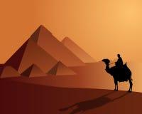Beduini a bordo di un cammello vicino alle piramidi Fotografie Stock