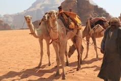 Beduinisch und ihre Kamele Stockbild