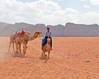 Beduinkamel arkivbild