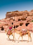 Beduinman och kamel Royaltyfri Fotografi