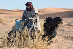 Beduino con il cammello, Marocco Fotografia Stock Libera da Diritti