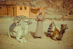Beduino e due cammelli Fotografia Stock Libera da Diritti
