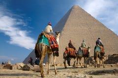 Beduino en camello cerca de la pirámide de Egipto Imagenes de archivo