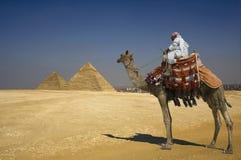 Beduino en camello contra las pirámides en Egipto  Foto de archivo