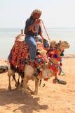 Beduino en el camello Foto de archivo