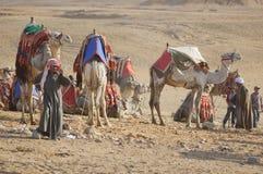 Beduino y camellos Fotos de archivo libres de regalías
