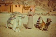 Beduino y dos camellos Fotografía de archivo libre de regalías