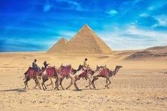 Beduinos en camello cerca de la gran pirámide en Egipto Imágenes de archivo libres de regalías