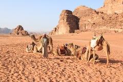 Beduinos que preparan los camellos para el turista que los montará en la puesta del sol en el desierto de Wadi Rum, Jordania foto de archivo