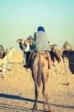 Beduins belangrijke toeristen op kamelen bij korte toeristenreis rond Royalty-vrije Stock Foto's