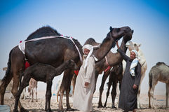Beduoin Camel Traders Royalty Free Stock Images