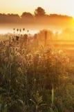 Bedöva soluppgånglandskap över dimmig engelsk bygd med G Royaltyfria Bilder